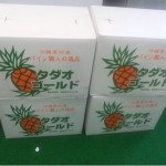 【予告】タダオゴールドが武蔵小山にやって来ます!!