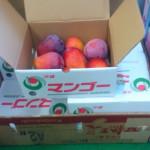 【沖縄濃蜜ミニマンゴー】入荷します♪